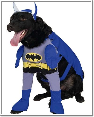 Dogilike.com :: ชุดสุดฮิตที่น้องหมาใส่มากที่สุด ^^