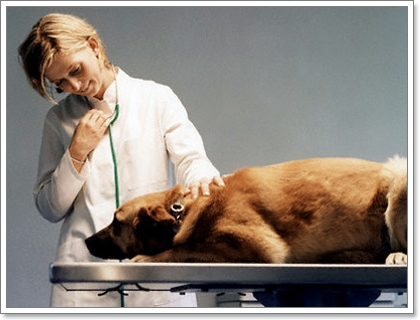 Dogilike.com :: 10 ข้อห้ามเมื่อต้องช่วยชีวิตสุนัข ช็อค