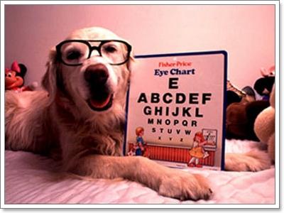 Dogilike.com :: 6 อาการ ที่บ่งบอกว่า น้องหมา(กำลัง)ป่วยด้วยโรคตา