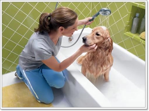 Dogilike.com :: พิษภัยของยาฆ่าเห็บหมัด ที่คนรักสุนัขต้องอ่าน