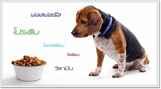 Dogilike.com :: วิถีแห่งโภชนาการที่เหมาะสำหรับสุนัขที่ป่วยเป็นโรคไต