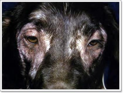 Dogilike.com :: เรื่องจริงที่คุณต้องรู้เกี่ยวกับ ภาวะภูมิแพ้อาหารในสุนัข