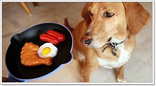 เรื่องจริงที่คุณต้องรู้เกี่ยวกับ ภาวะภูมิแพ้อาหารในสุนัข
