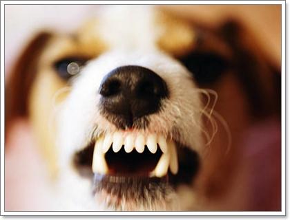 Dogilike.com :: สุนัขดุแค่ไหน?  ต้องพาไปบำบัดรักษา