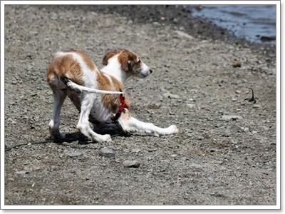 Dogilike.com :: อันตรายจากสัตว์ร้ายที่มากับสายฝน