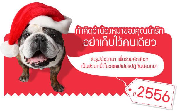 ╩╞т╥т╧2556, calendar2013, 2013, ╧Им╖кар, ╩╞т╥т╧╧Им╖кар, гмеЮ╩Ю╩мцЛ╧Им╖кар, гмеЮ╩Ю╩мцЛ, А╗║©цу