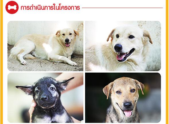 ศูนย์รักษ์สุนัขหัวหิน,find-a-home, หาบ้านให้หมา, pedigree, เพดดีกรี, น้องหมาหาบ้าน