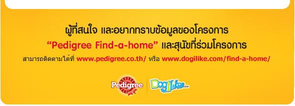 �ٹ���ѡ���عѢ����Թ,find-a-home, �Һ�ҹ������, pedigree, ྴ�ա��, ��ͧ����Һ�ҹ