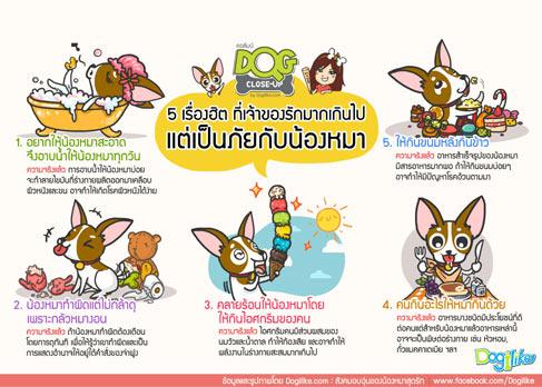 dogilke, dog close-up, หมอ, สัตวแพทย์, คำถาม, สุนัข, ข้อสงสัย, หมอต้น, พี่มะเหมี่ยว, infographic, 5 เรื่องฮิต