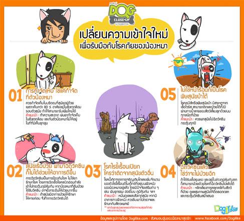 dog close-up, infographic,กำจัดเห็บม, พิษสุนัขบ้า, ขี้เรื้อน, ฉีดวัคซีน