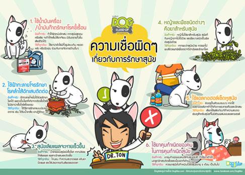 dogilke, dog close-up, หมอ, สัตวแพทย์, คำถาม, สุนัข, ข้อสงสัย, หมอต้น, พี่มะเหมี่ยว, infographic, บทความ, ความเชื่อผิดๆ, สุนัขเลียมือ, ฟ้าทะลายโจร, ยาคุม
