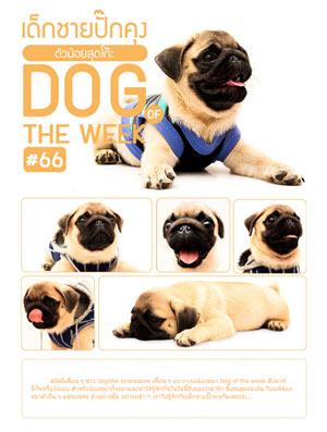 มาร่วมประกาศความน่ารัก, ซุป'ตาร์, น้องหมา of the week, วีรกรรมแสนซน, พิเศษ, ของรางวัล, ฟรี