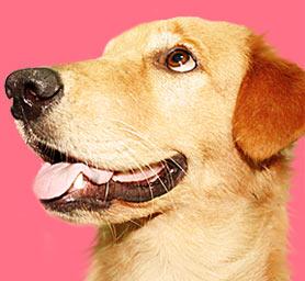 มะละกอ, zaab stories, it's me, love item, love food, นิสัยสุดแนว, วีรกรรมสุดแสบ, เคล็ดลับการเลี้ยงสุนัข, dog of the week 67