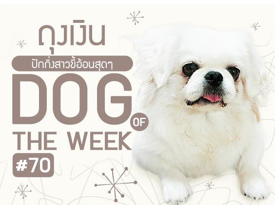 ถุงเงิน, zaab stories love item, นิสัยสุดแนว, วีรกรรมสุดแสบ, เคล็ดลับการเลี้ยงสุนัข, dog of the week 70