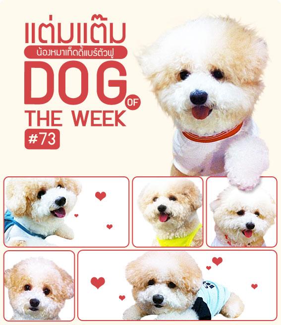 แต่มแต๊ม , น้องหมา , สุนัข , น่ารัก ,พุดเดิ้ล, poodle ,  วิธีฝึกสุนัข , นิสัยสุดแนว, วีรกรรมสุดแสบ, dog of the week 73