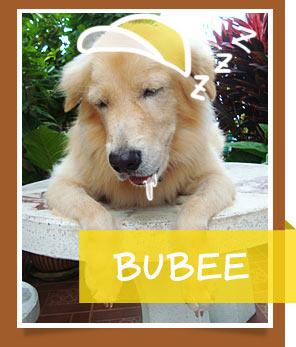 บู้บี้, น้องหมา , สุนัข ,  วิธีฝึกสุนัข , วีรกรรมสุดแสบ, dog of the week 85