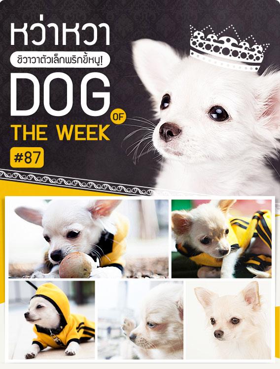 หว่าหวา,whawha,  น้องหมา , สุนัข ,  วิธีฝึกสุนัข , วีรกรรมสุดแสบ, dog of the week 87