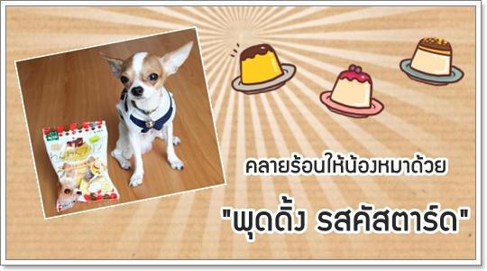 Dogilike.com :: Review : พุดดิ้ง รสคัสตาร์ด สำหรับน้องหมา