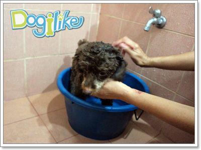 Dogilike.com :: Review : เกลือหอมอาบน้ำน้องหมา