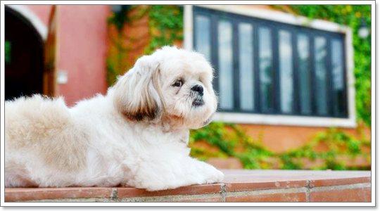 Dogilike.com :: Review : สถานที่พักตากอากาศสุดหรูที่พาน้องหมาเข้าพักได้