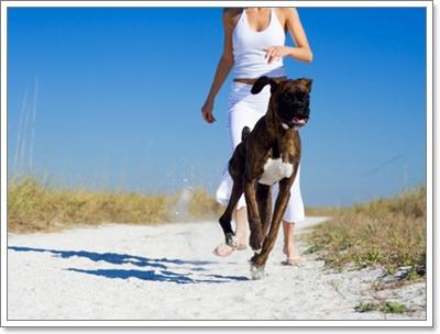 Dogilike.com :: Review : อาหารสำเร็จรูปสำหรับน้องหมาป่วยเป็นโรคหัวใจ
