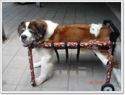 Dogilike.com :: Review : รถวีลแชร์สำหรับน้องหมา
