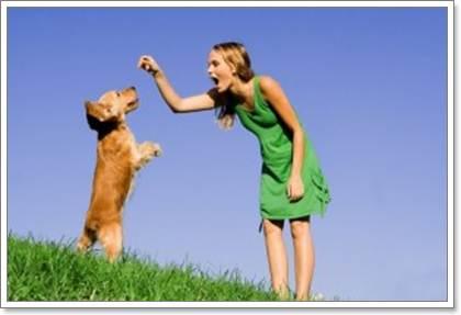 Dogilike.com :: แบ่งเวลา ... เติมความรักให้น้องหมาอย่างถูกวิธี