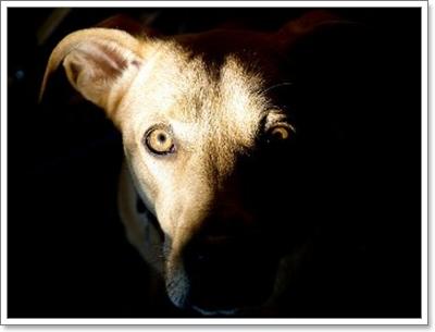Dogilike.com :: 4 พฤติกรรม ของน้องหมาที่เราเข้าใจผิดมาตลอด!