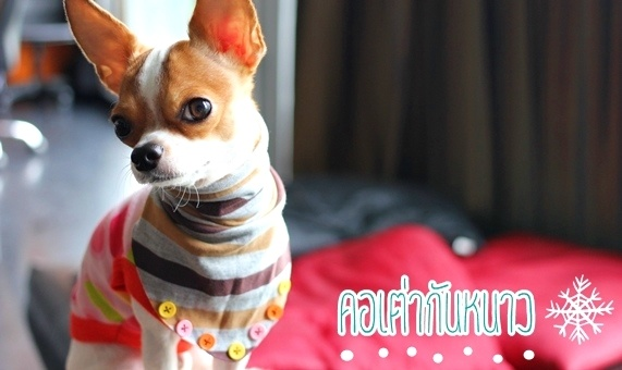 Dogilike.com :: คอเต่ากันหนาว