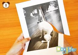 Dogilike.com :: รูปภาพ (น้องหมา) ล่องหน