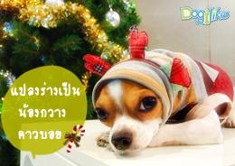 Dogilike.com :: หูกวางเรนเดียร์