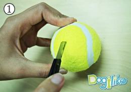 Dogilike.com :: บอล ดึ๋ง ดึ๋ง