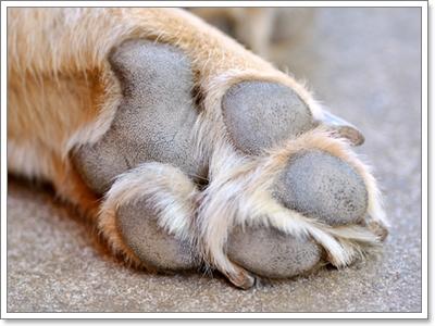 Dogilike.com :: ไขข้อสงสัย!.....น้องหมามีวิธีการระบายความร้อนอย่างไร