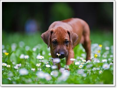 Dogilike.com :: บำบัดน้องหมาด้วยการรักษาแบบแพทย์ทางเลือก