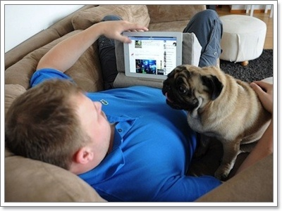 Dogilike.com :: เปิดโลกน้องปั๊ก ... เรื่องที่ผู้เลี้ยงจำเป็นต้องรู้!