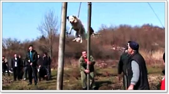 Dogilike.com :: 5 ความเชื่อและพิธีกรรมแปลกๆ เกี่ยวกับน้องหมา