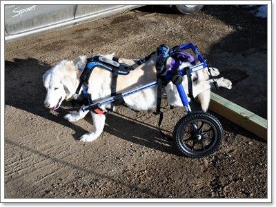 Dogilike.com :: 10 เรื่องน่ารู้เกี่ยวกับน้องหมาพันธุ์ใหญ่