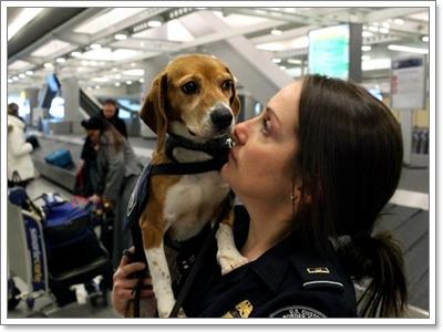 Dogilike.com :: 7 เหตุผลที่ทำให้บีเกิ้ลกลายเป็นน้องหมากู้โลก!