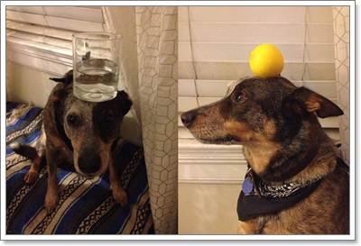 Dogilike.com :: รวมพล น้องหมามากความสามารถแห่งปี 2013