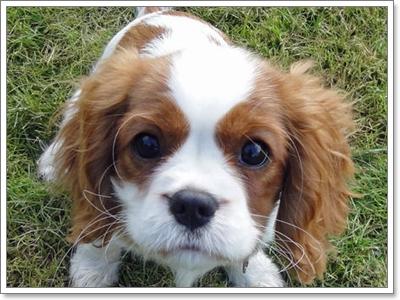 Dogilike.com :: รวมฮิต 10 สายพันธุ์น้องหมาที่ต้องการความรักแบบสุดๆ