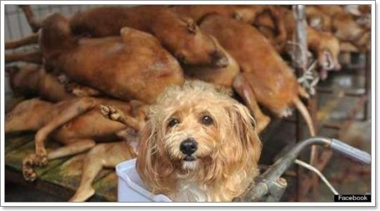 Dogilike.com :: เผย! เรื่องเศร้า สุดสะเทือนใจของน้องหมารอบโลก