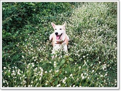 Dogilike.com :: รวมเรื่องราวสุดเทรนด์ของน้องหมาปี 2013 !!