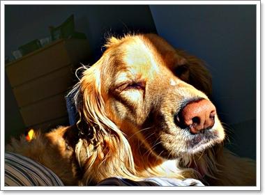 Dogilike.com :: สงสัยไหมทำไม? น้องหมาถึงชอบนอนอาบแดด