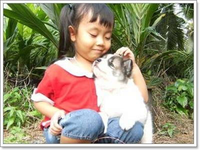 Dogilike.com :: ความจริง ... ของน้องหมาบางแก้วที่คนไทยควรรู้