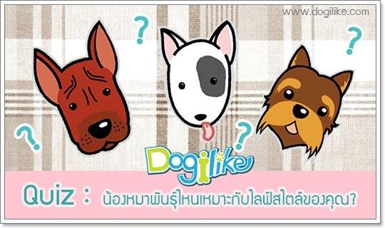 Dogilike.com :: ��ͧ��Ҿѹ����������СѺ�ſ�����ͧ�س