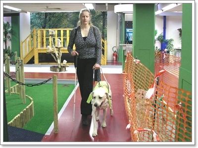 Dogilike.com :: เส้นทาง ... กว่าจะเป็นน้องหมาช่วยเหลือคนพิการ