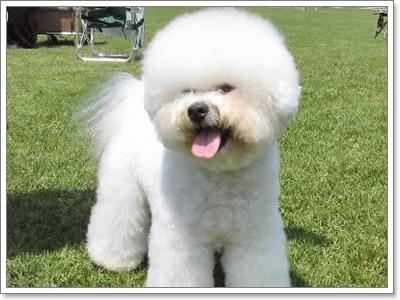 Dogilike.com :: 3 แฝด (คนละฝา) น้องหมาต่างสายพันธุ์
