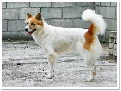 Dogilike.com :: ��ͧ��Һҧ��Ƿ���������һ�СǴ ������ѡɳ����ҧ�ú�ҧ