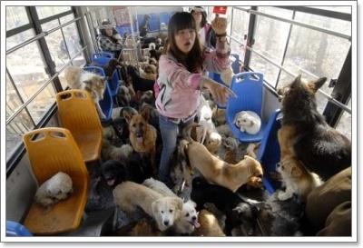 Dogilike.com :: มาดู 10 อันดับ ประเทศที่เลี้ยงน้องหมามากที่สุดในโลกในปี 2013