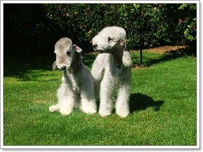 Dogilike.com :: รวมพล!! สุดยอดสายพันธุ์น้องหมาสุดแปลก